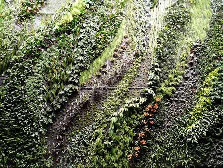 zielona ściana żywa ściana przymorze gdańsk