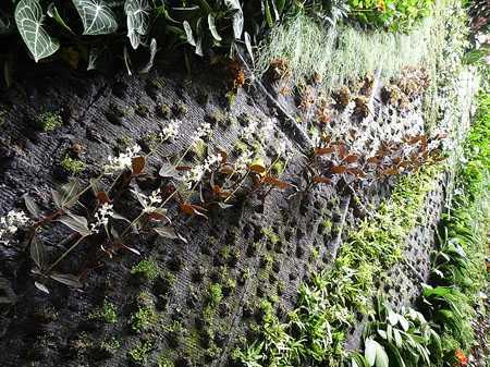 ściana żywej zieleni galeria przymorze gdańsk