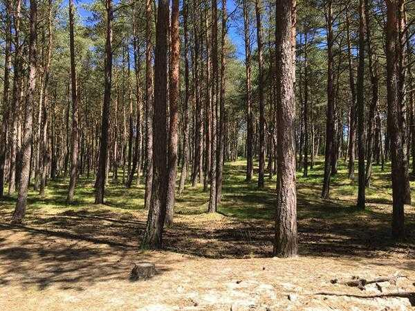 apartamenty stegna forest mierzeja (15) (Copy)