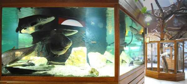 atrakcje na kaszubach Zoo Egzotyczne Kaszuby