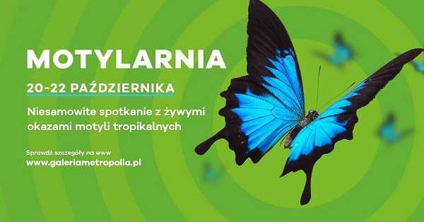 galeria metropolia wystawa motyli