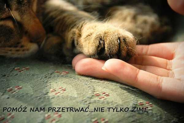 galeria metropolia zbiorka dla kotow gdansk
