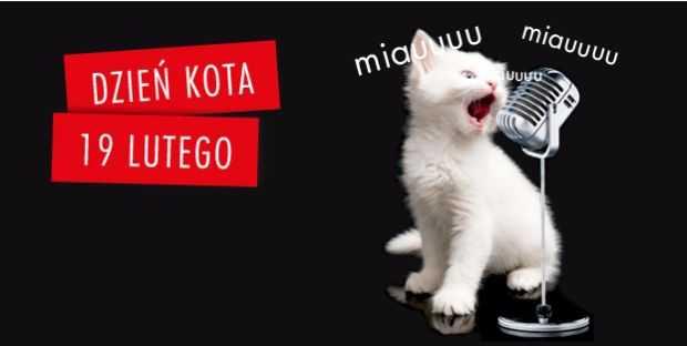 światowy dzień kota galeria bałtycka gdańsk