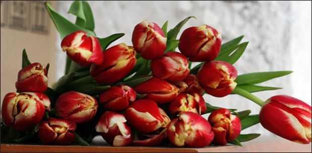 osowa kwiaciarnia