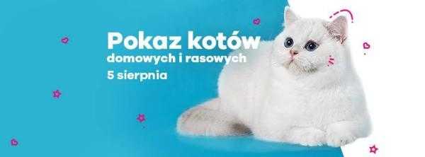 pokaz rasowych kotow galeria metropolia