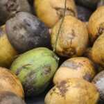 produkty kokosowe sklep tobio