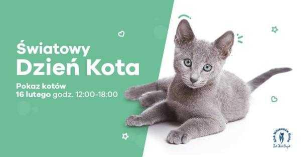 wystawa kotow galeria metropolia 1