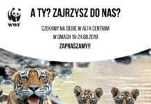 alfa centrum gdansk wydarzenia