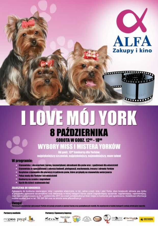 i love mo york alfa centrum