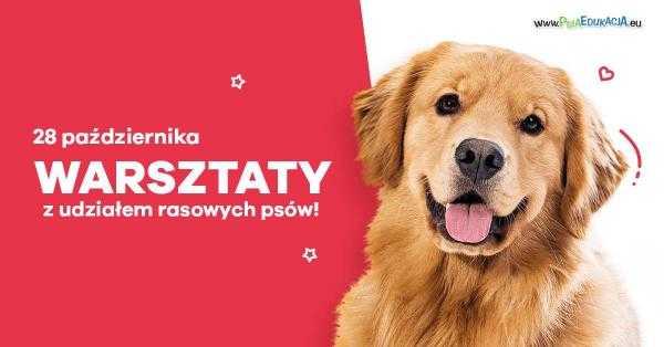 psia edukacja galeria metropolia